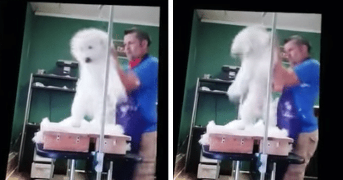 abusive groomer featured