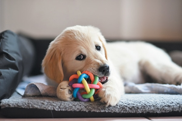 golden eating toy